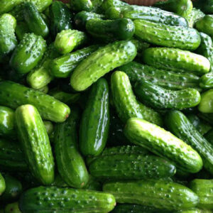 this is a photo of freshly washed pickling cucumbers