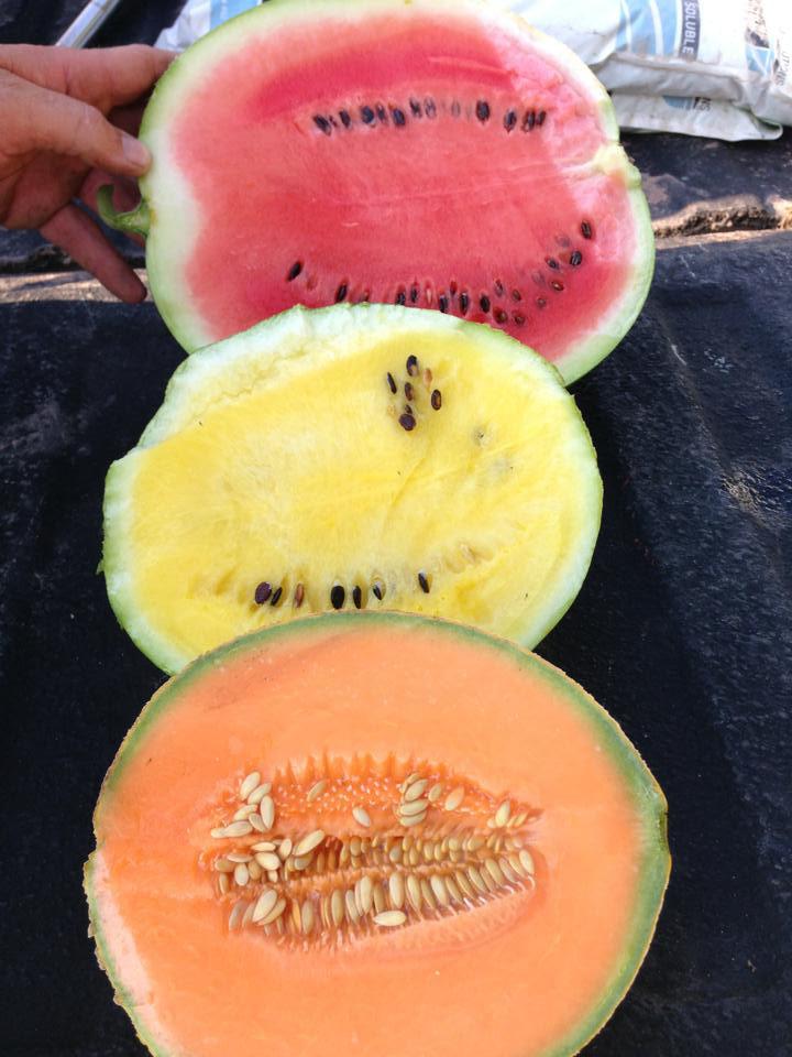 watermelon, cantaloupe