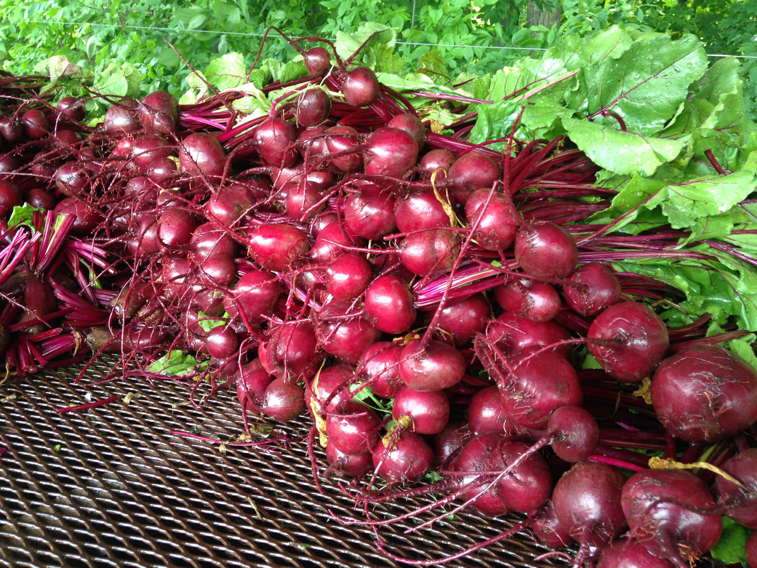 Red Round Beets