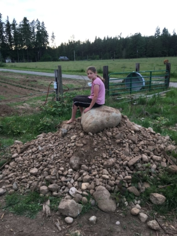 this pile of rocks was picked as we worked the soil this season