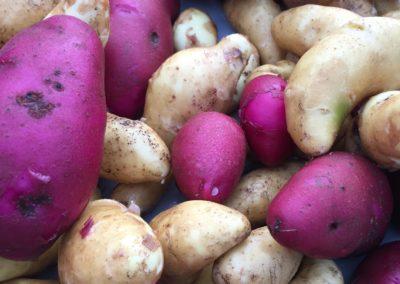 Mixed fingerling potatoes