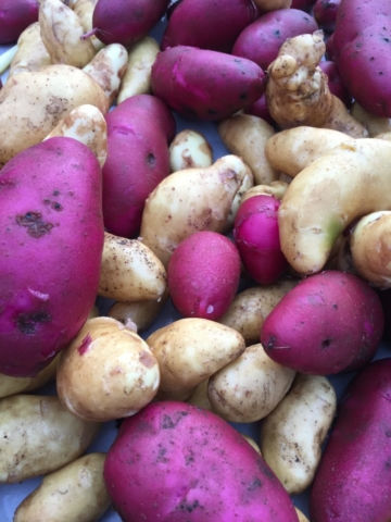mixed-fingerling-potatoes