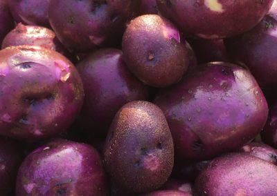 New blue potatoes