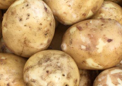 New yellow potatoes