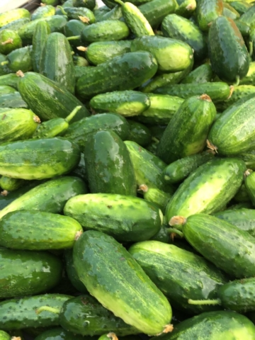 very tasty pickling cucumbers