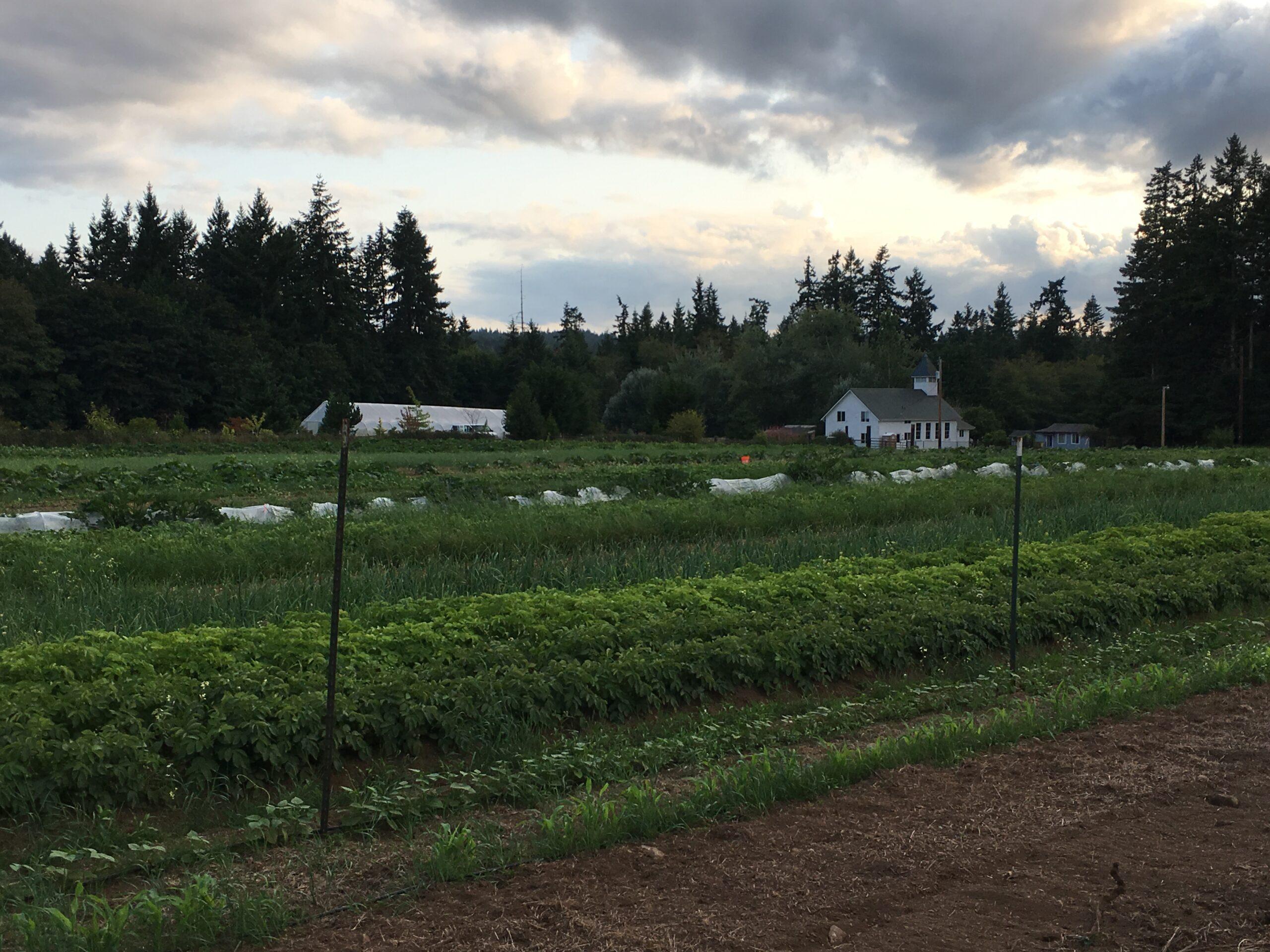 the farm at dusk