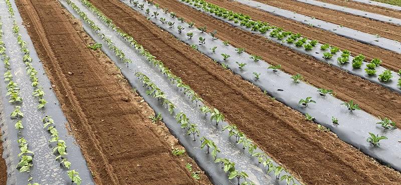 Young Vegetable Plants Kingston Farms, WA