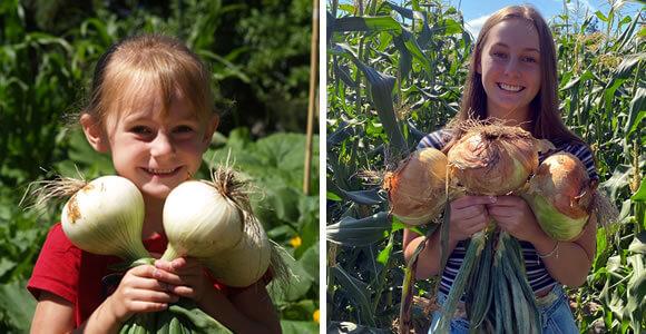 sweet-onions-daughter-2010-2020-organic-fat-turnip-farms-kingston-wa-a